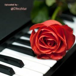 Can't Help Falling In Love - Piano